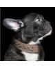 Obroża dla Psa Zak Tan Collier brązowa