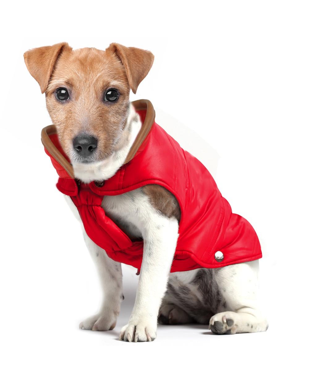 przeciwdeszczowa kurtka jack russell terrier