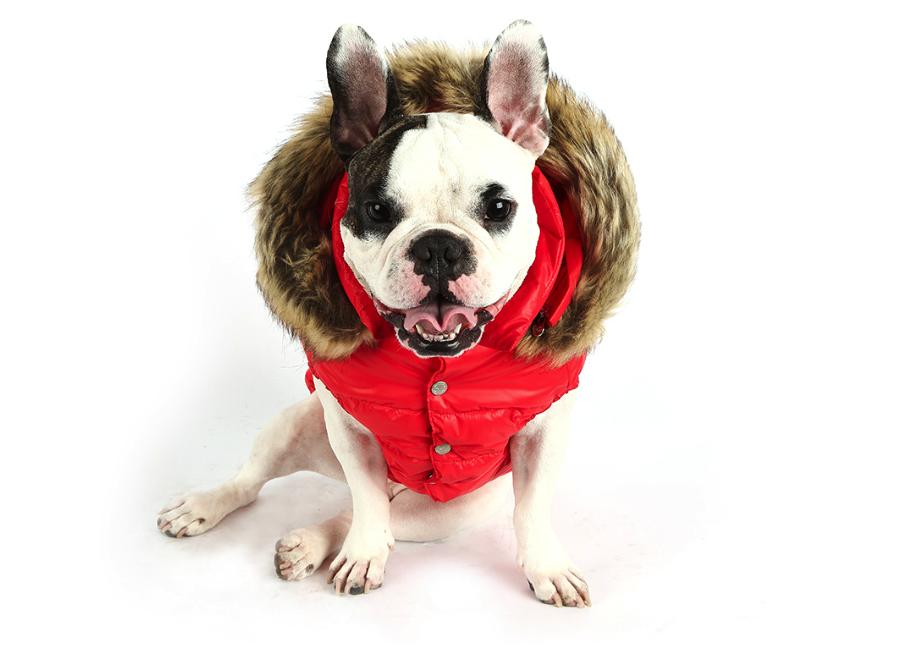 Czerwone ubranko dla psa