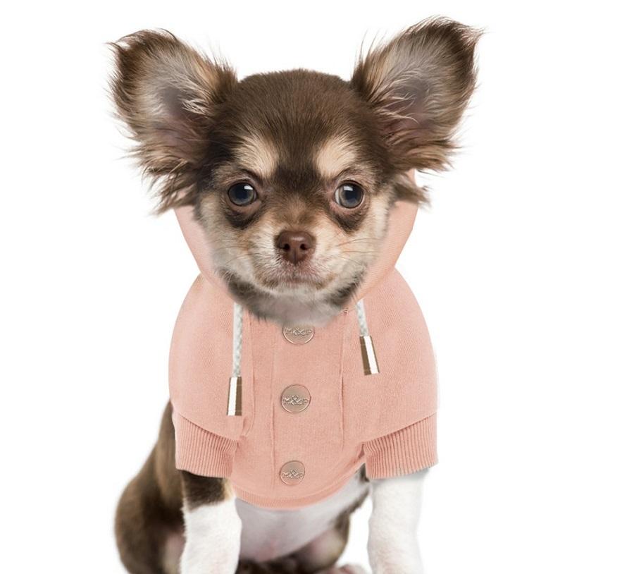 Pies w bluzie