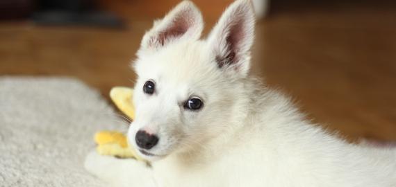 Gadżet zabawka dla psa